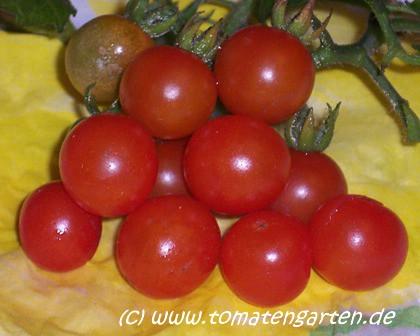 mögen tomaten keinen wind