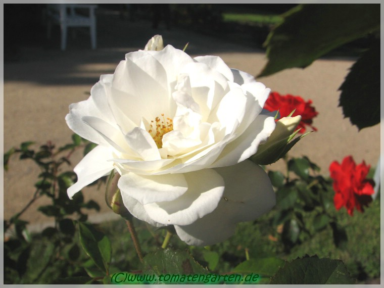 rosengarten forst lausitz