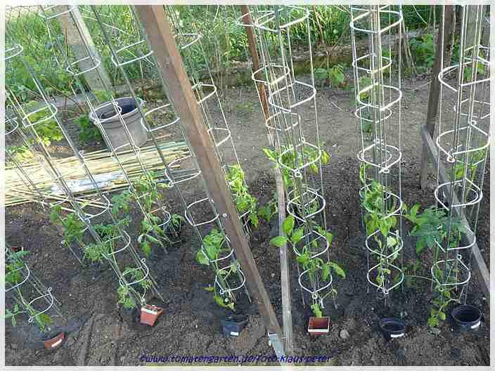 tomatengarten 2011 tomatenpflanzung helmuts gartentagebuch. Black Bedroom Furniture Sets. Home Design Ideas